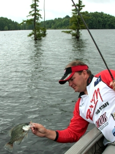 Rod Wall boats a crappie near the trees.