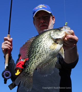This 14-inch crappie weighed 2.75 instead of the usual 2.50.