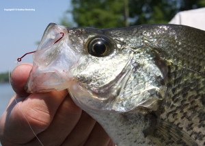 Tru-Turn Hooks are awesome for crappie.
